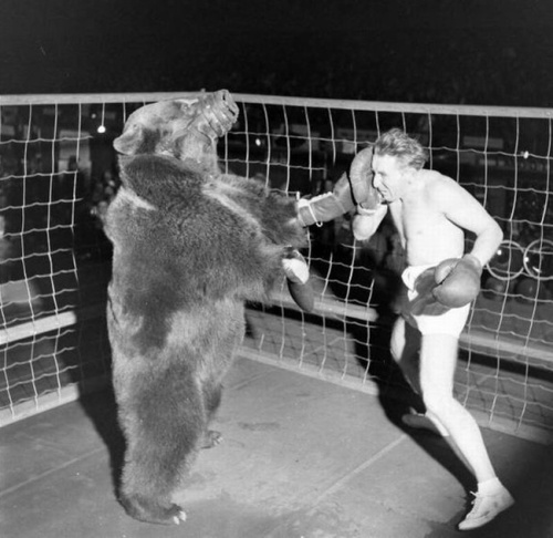 A bear fighting a human