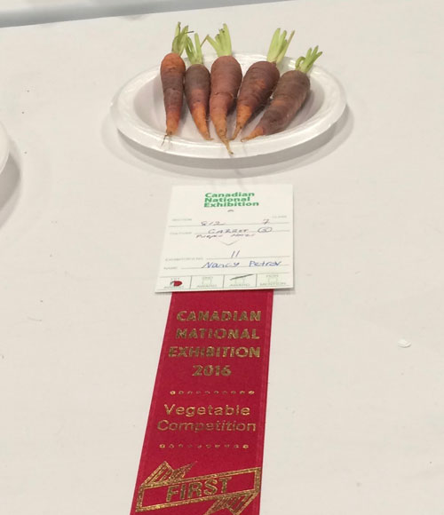 "Championship Carrot. These are what championship carrots look like. The part I enjoy most about this is knowing that someone pulled those out of the ground and said to themselves, ""These are fucking perfect. I'm totally going to enter them into the C.N.E. vegetable competition and win a goddamn ribbon."""