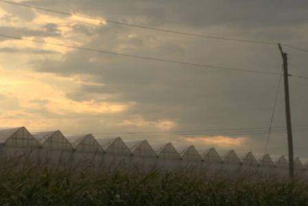 Ontario greenhouses